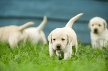 American Veterinary Medical Association says 'Prevent Dog Attacks By Not Focusing on Breed' 1