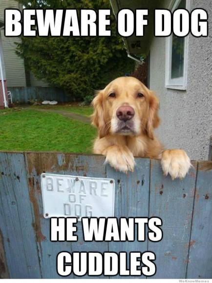 beware-of-dog-meme