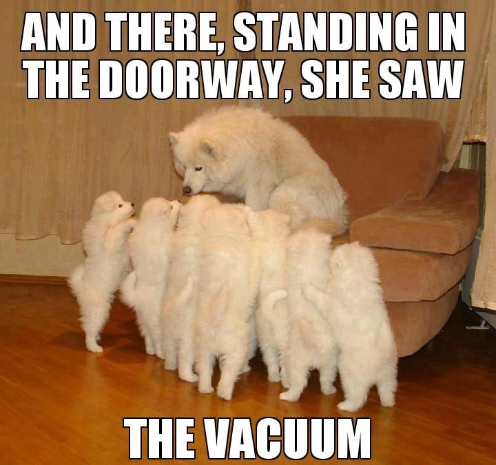dog-story-telling-meme