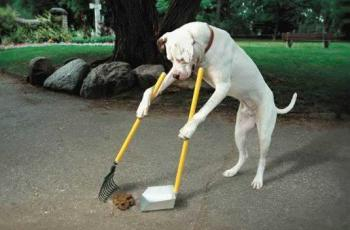 Dog Mess Decoration: Beware, This is NO April Fool! 4