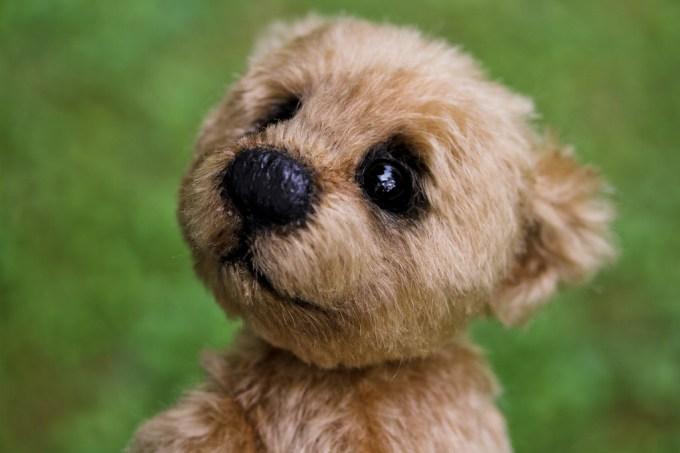 fashion dog photo