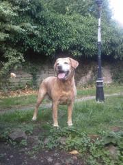 Chloe waiting for the tennis ball