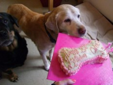 Chloe arrives to smell the delicious cake