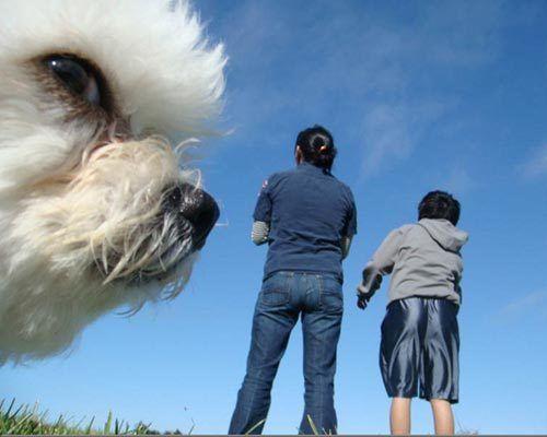 dog_photobomb_4