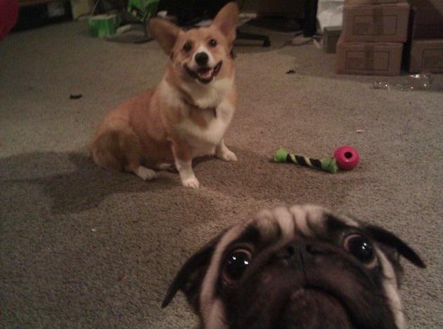 dog_photobomb_5