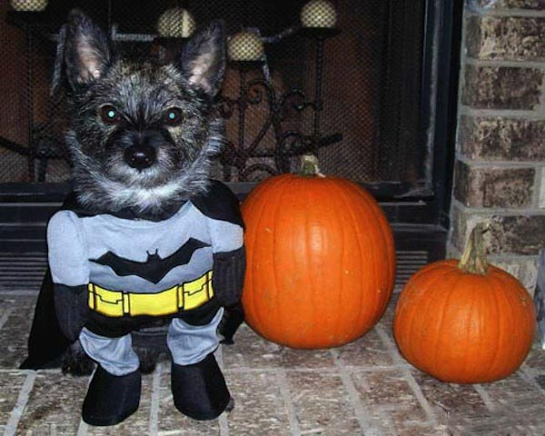 Batman-Dog-Halloween-Pet-Costume