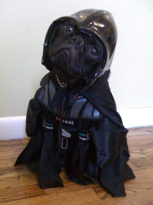 Darth Vadar dog