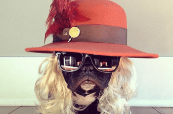 These 12 Dogs Love Halloween, Probably More Than You Do 1