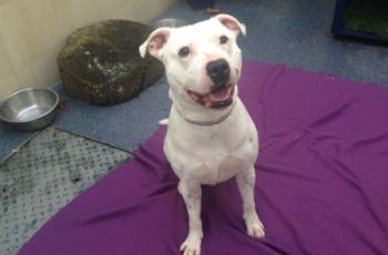 Special Needs Dogs Being Given New Lease of Life - Could You Adopt Gordon? 1