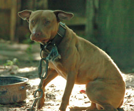 FL Dogfighting Rescue