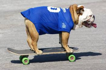 World's Favourite Skateboarding Dog Passes Away 2