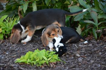 These Puppies Are a World First Thanks to IVF, See How They Did It 2