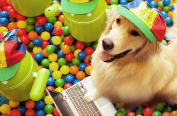 Google Handed Twitter Reigns to a Dog to Celebrate Canine Trending Topic 7