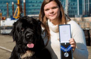 Dog Who Saved the Lives of 9 People is Given Posthumous Award 10