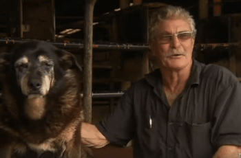 WATCH: Tribute to Maggie the Kelpie 'World's Oldest Dog' 4