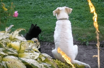 WATCH: This Cat & Dog Duo Set The Friendship Barrier High 2