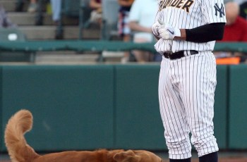 Have You Heard About the Bat Dogs Upstaging Baseball Giants, Like A-Rod? 16