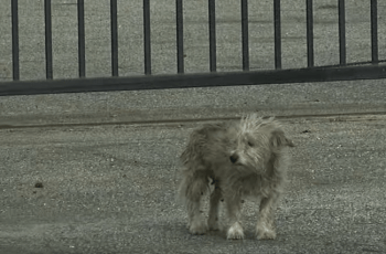 WATCH: Homeless Dog Too Scared to Be Rescued (but Now Look at Him!) 2
