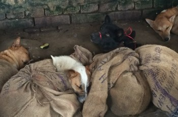 Campaigners Launch Petition to End India's Illegal Dog Meat Trade 3