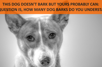 Your Dog Understands 165 Human Words But How Many Of His Barks Can YOU Translate? 1