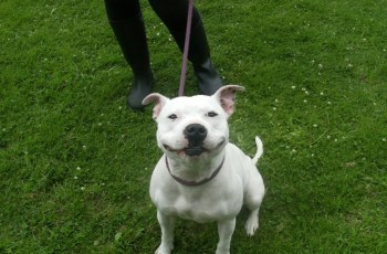 These Dogs Looking for New Homes Want to Wish You a Happy #WorldSmileDay 7