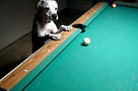 This Dog is Probably Better at Playing Pool Than You 3