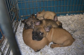 The Law on Dog Breeding is Changing - Does it Go Far Enough For You? 2