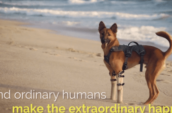 Thai-Based Animal Welfare Organisation Win Award for Short Film About a Dog Named Cola 4