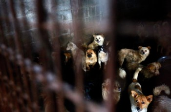 US Senators Seek to Amend Animal Welfare Act to Ban Dog and Cat Meat Trade in America 7