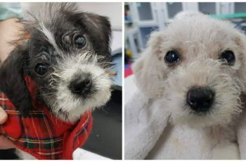 Sick Puppies Abandoned and Left for Dead in North London 5