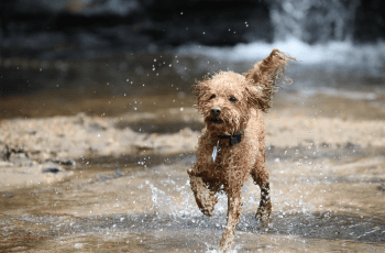 Why Dogs Are Good for You 4