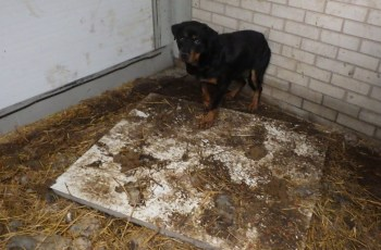 Puppy Farmer Made £12,000 Per MONTH, Profiting From Misery of Dogs 2