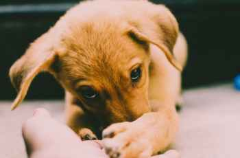 One in 10 Puppies Abandoned After Just One Month, What Can We Do to Stop the Problem? 3