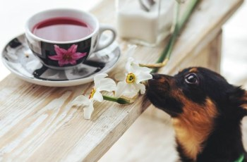 This Easter Remember the Symptoms of Chocolate Poisoning in Dogs 3