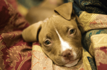 Could The UK FINALLY Be Set To Abolish Breed Specific Legislation? 3