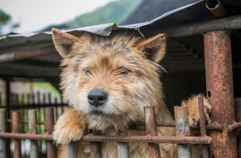Dog Meat Farmer Closes Farm Saying 'It Is Much Better to Stop Farming Dogs, I Will Be Relieved for It to End' 2