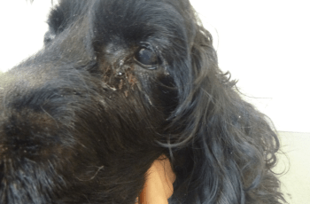 Nurse Banned From Owning a Dog Because of This 1