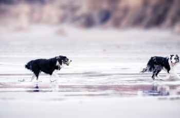 Dog Beach Bans Ends, Until Springtime Anyway 2
