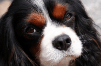 Open Letter to the Kennel Club Says What a Lot of us Are All Thinking 1
