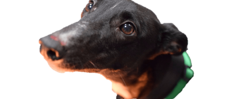 This Dog Camera Helped This Rescue Dog Find a New Home 3