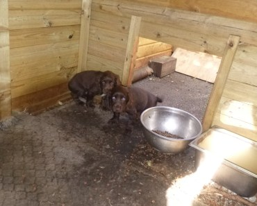 Suspended Sentences Handed Down to Kent Family Found Guilty of Animal Welfare Offences 6