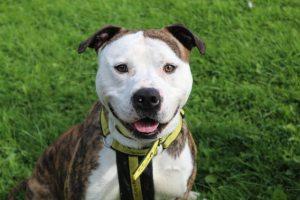 Coronavirus Crisis: Dogs Trust Announces New Measures to Protect Staff & Visitors 5
