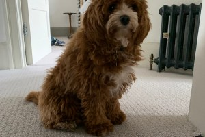 WATCH: Andrew Cotter Narrates Cavapoo's Stealthy Moves in New Video for Charity 8