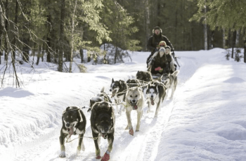Want To Go Dog Sledding In Lapland? Here's How To Do It 12