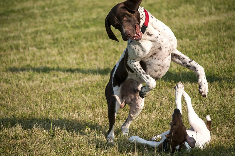 5 Things You Should Never Do At The Dog Park