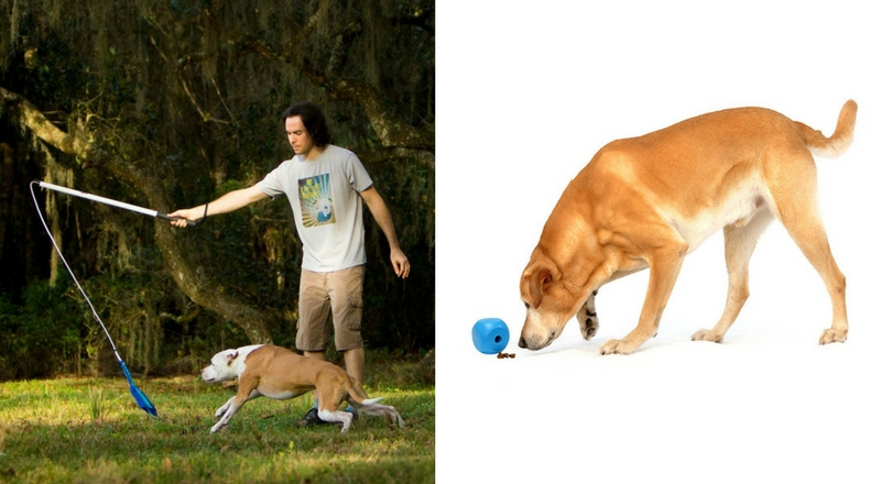 the 11 best toys for hyperactive dogs - dog mom central