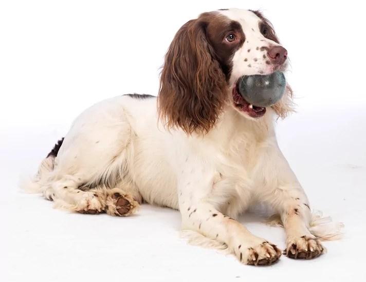 6. Dog and ball photo