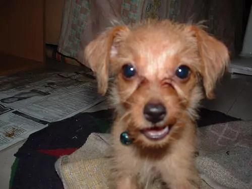 dog muffin photo