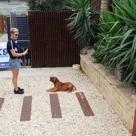 dog trainer sit