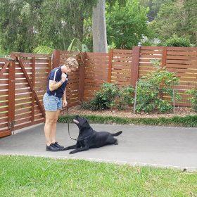 lab dog training